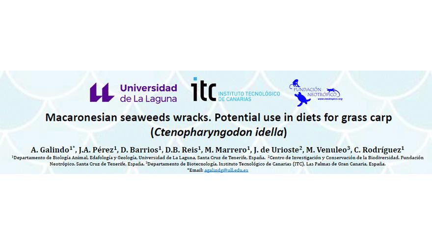 Macaronesian Seaweed Wracks